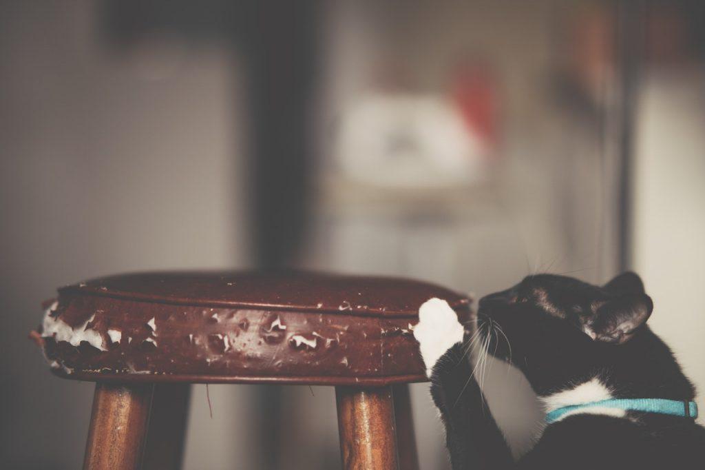 חתולים אוהבים לגרד